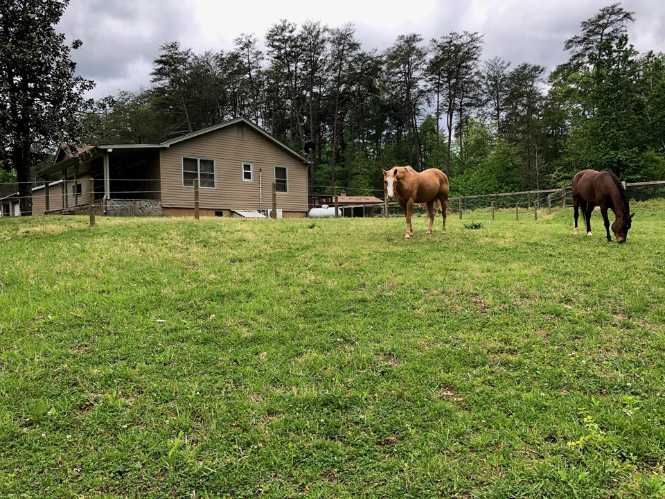 happy horses grazing  this grass paddock is located in between the dry lots.